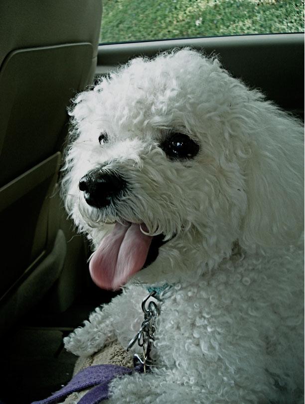 Daisy--aged 12 years