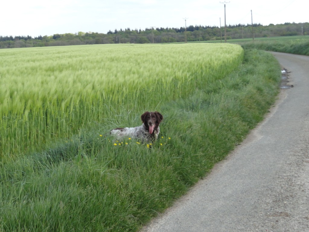 One happy dog.