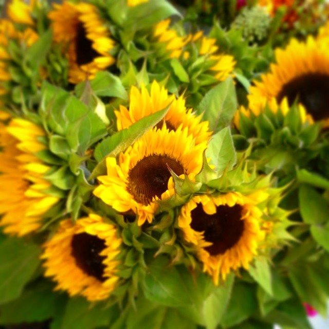 #sunny #sunflowers are today's #flowersoftheday! #summer #sf #Friday #flowers #flower #yellow #happy #simplepleasures