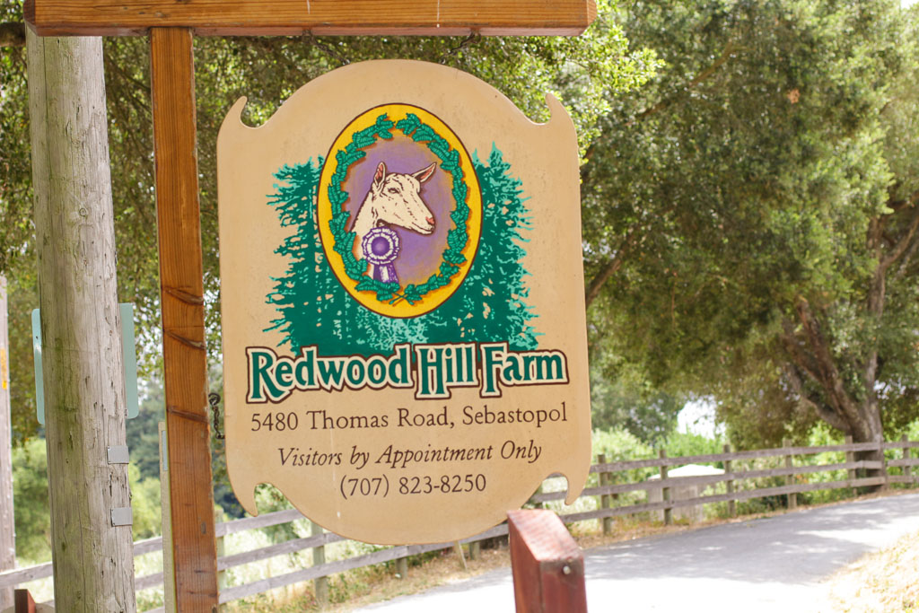 At the entrance to Redwood Hill Farm.