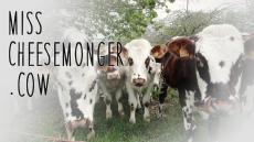 Misscheesemonger.cow