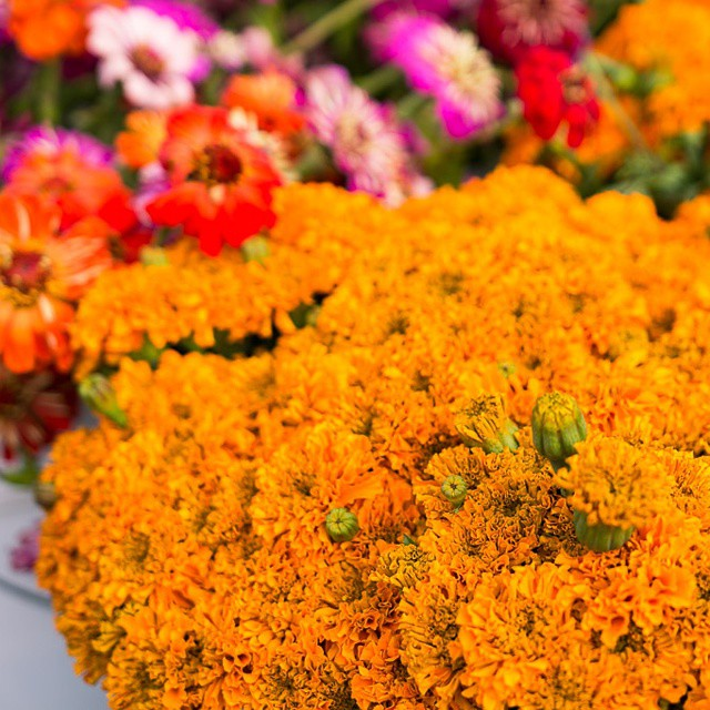 #Sunday #flowers! Lots of #marigolds. #farmersmarket #flowersoftheday #gold #pretty #sf