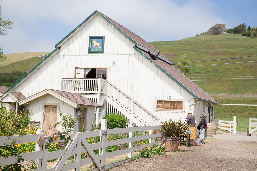 Harley Farms Goat Dairy in Pescadero, California.