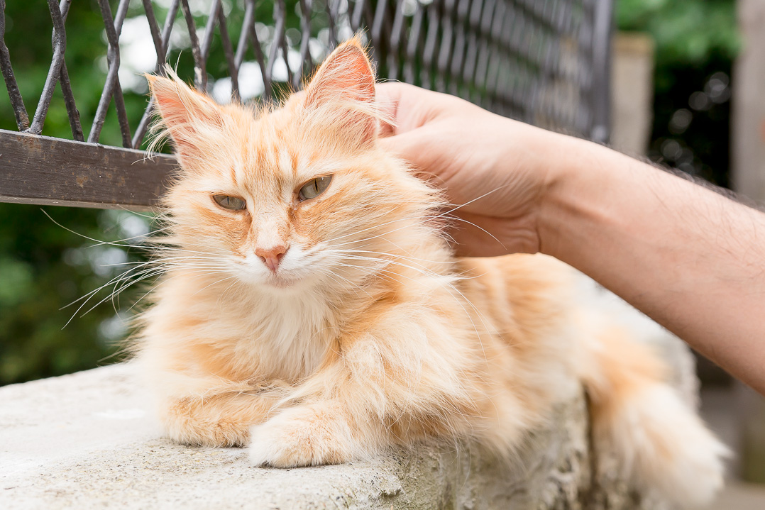 One of the many cats we saw in Italy.