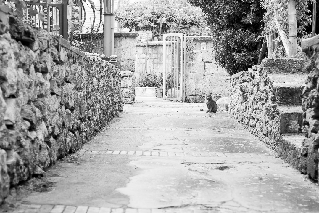 There were so many stray cats. Ravello.