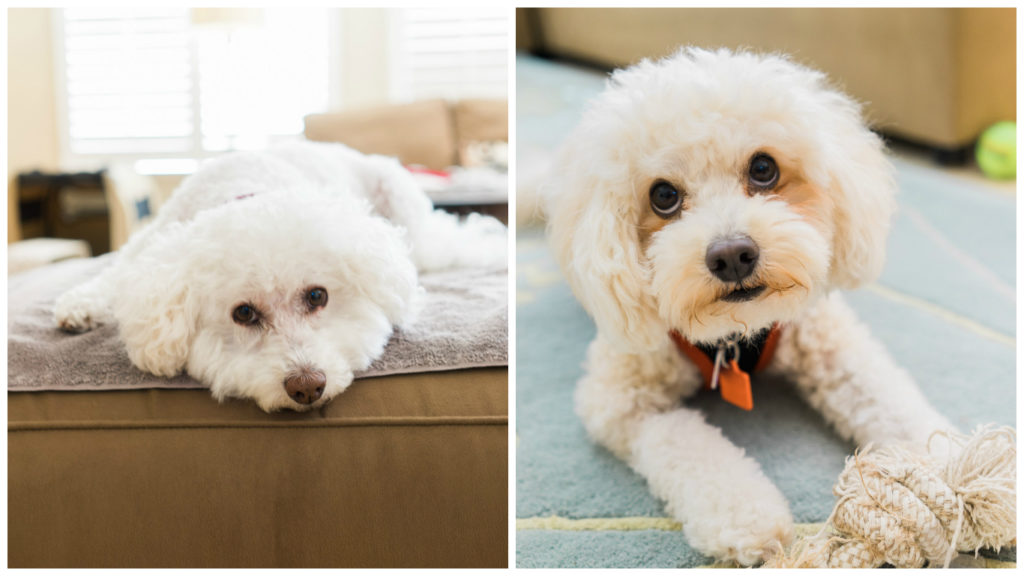 My fluffy family dogs! By Vero Kherian for misscheesemonger.com, the San Francisco cheese blog.
