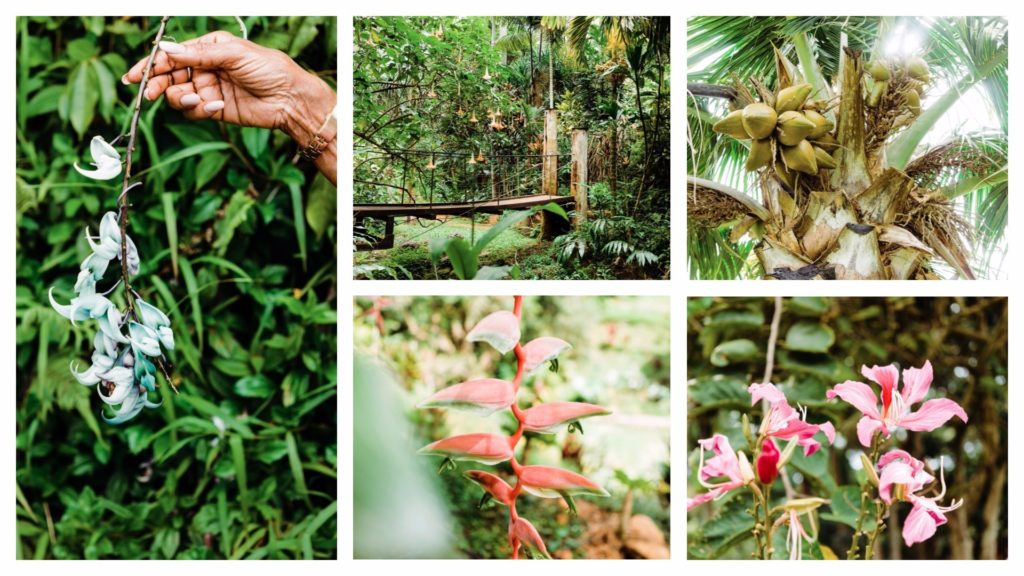 Princeville Botanical Gardens on Kauai. Visiting Kauai by Vero Kherian. misscheesemonger.com.
