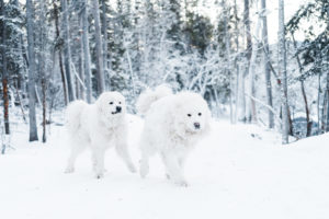 Dogsledding in the Yukon Territory with Into the Wild Adventures. By Vero Kherian. misscheesemonger.com.